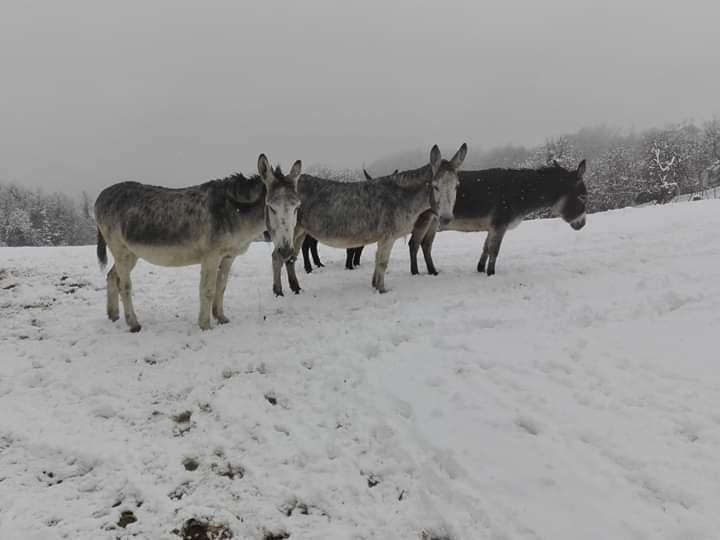 asinelli e la neve