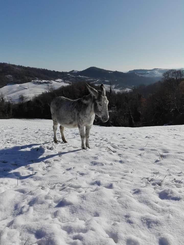 Asini e neve