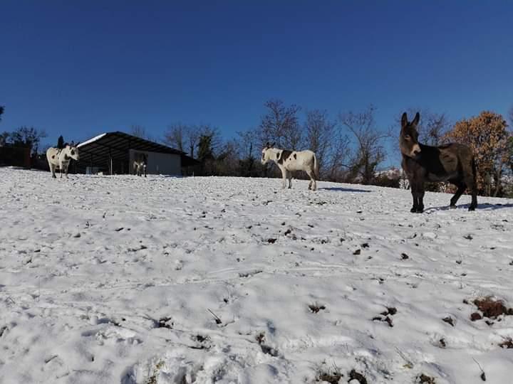 Asini sulla neve